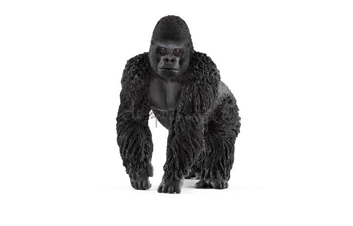 14770 Gorilla, Mannetje