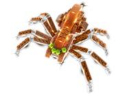 61015_Spiderdoos1.jpg