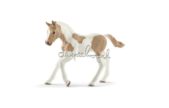13886 Paint Horse Veulen, Horse Club, New 2019